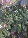 1 blomma arkivbilder