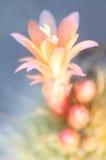 blomma Arkivbild