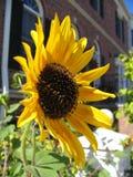 blomma Royaltyfri Foto