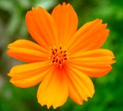 blomma 7 Arkivbild