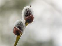 Blomma Royaltyfria Bilder