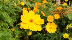 Blomma Arkivfoton