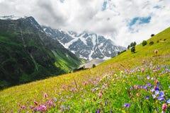 Blomma alpina ängar i Kaukasuset Arkivbilder