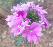 Blomma av beuty Royaltyfria Bilder
