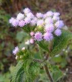 Blomma av beuty Royaltyfri Bild
