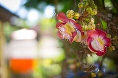 Blomma av Buddha 2 Fotografering för Bildbyråer