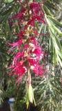 Blomma av en växt arkivfoto