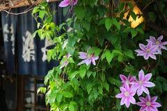 Blomma av gatan Arkivbilder
