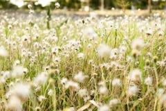 Blomma av gräs royaltyfria foton