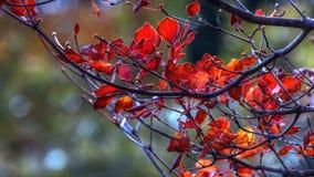 Blomma av hösten Arkivbild