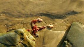Blomma av havsväxt i sanden på stranden Arkivbilder