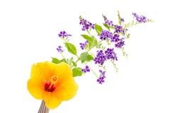 Blomma av hibicusen och durantaen som isoleras på vit bakgrund Royaltyfria Bilder