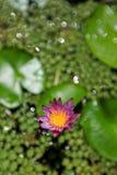 Blomma av insikten Arkivbild