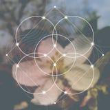 Blomma av liv - gripa in i varandra cirklar forntida symbol framme av suddig photorealistic naturbakgrund Sakral geometri - M royaltyfri foto