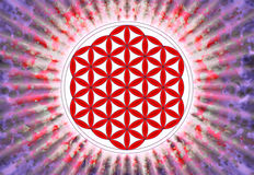 Blomma av Live Symbol - sakral geometri Fotografering för Bildbyråer