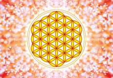 Blomma av Live Symbol - sakral geometri Royaltyfria Bilder