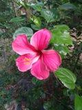 Blomma av magisk doft Royaltyfri Fotografi