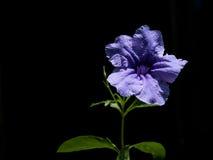 Blomma av ogräsen Arkivfoton