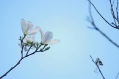 Blomma av orkidéträdet Royaltyfri Fotografi