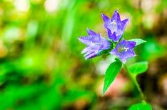 Blomma av violett färg Arkivfoto