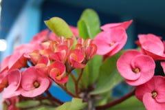 Blomma Baja California Sur royaltyfria foton