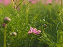 Blomma bland det grönaktiga gräset Royaltyfria Foton