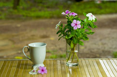 Blomma blomma royaltyfria bilder