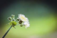 blomma blommafjäder Royaltyfri Fotografi