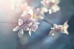 Blomma blommande fruktträd - härlig natur i vår royaltyfri foto