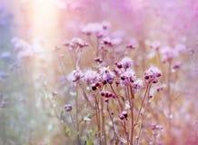 Blomma blommande tistel & x28; burdock& x29; i äng royaltyfri fotografi