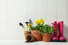Blomma blommor, i krukor och att arbeta i trädgården utrustning på tabellen arkivbilder