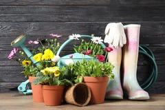 Blomma blommor, i krukor och att arbeta i tr?dg?rden utrustning royaltyfria bilder