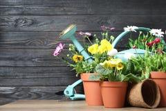 Blomma blommor, i krukor och att arbeta i tr?dg?rden utrustning p? tabellen fotografering för bildbyråer