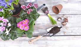 Blomma blommor och kulor på tabellen fotografering för bildbyråer
