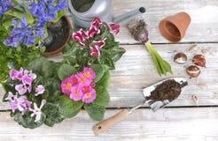 Blomma blommor och kulor på trädgårdtabellen arkivfoton