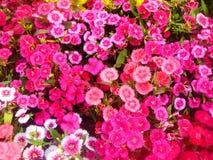 Blomma blommor, tapeten, bakgrund, färg Royaltyfri Fotografi