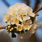 Blomma-blomning Royaltyfria Foton