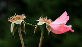 Blomma; blomning; mångfärgat arkivbilder