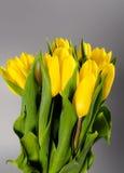 Blomma buketten från gula tulpan i vas på grå backg Fotografering för Bildbyråer