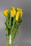 Blomma buketten från gula tulpan i vasen som isoleras på grå backg Royaltyfri Foto