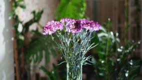 Blomma buketten i strålarna av ljus, rotation, den blom- sammansättningen består av ljus purpurfärgad turkisk nejlika I arkivfilmer