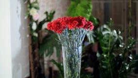 Blomma buketten i strålarna av ljus, rotation, den blom- sammansättningen består av ljus röd turkisk nejlika i arkivfilmer