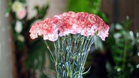Blomma buketten i strålarna av ljus, rotation, den blom- sammansättningen består av ljus - rosa turkisk nejlika i stock video