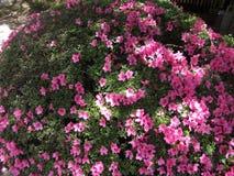 Blomma buske Royaltyfria Foton