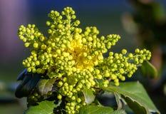 Blomma buske Royaltyfria Bilder