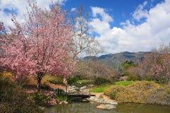 Blomma CherryTree Arkivbild