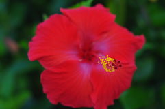 blomma 3d Royaltyfri Fotografi