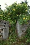 Blomma den beautifully hemliga trädgården POPENHAUSEN för blommor Royaltyfri Foto