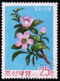 blomma den kinesiska kvitten, serie, circa 1975 Arkivfoton