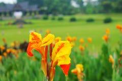 Blomma, dess härligt och ska inte evakueras Arkivbild
